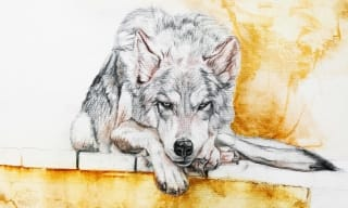 Ashley Gaboury Drawing Wolf