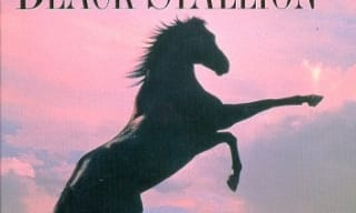 The Black Stallion horse book