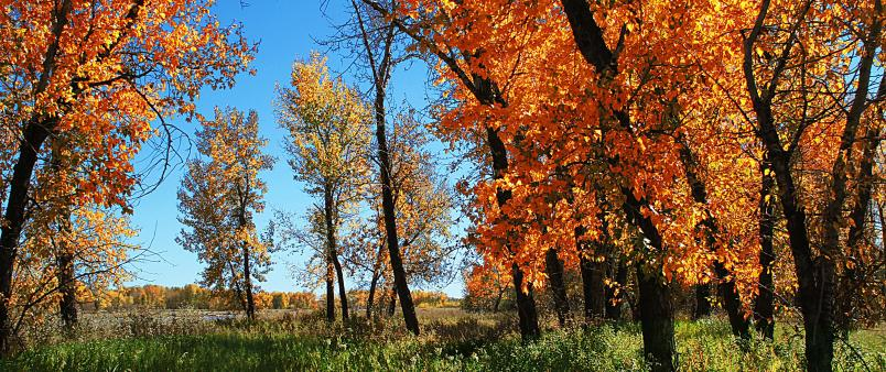 Trees with orange leaves during fall in river valley - photo credit: Han Nguyen