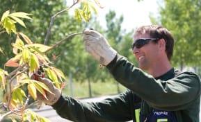 Parks Tree Maintenance