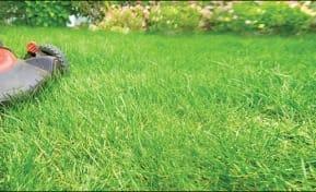 Organics grass clippings