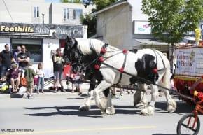 Okotoks Parade Day Horse Float