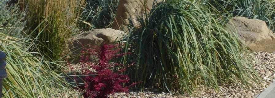 xeriscaping, mulch