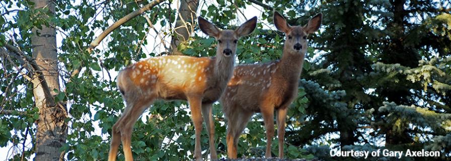 urban deer, task force,