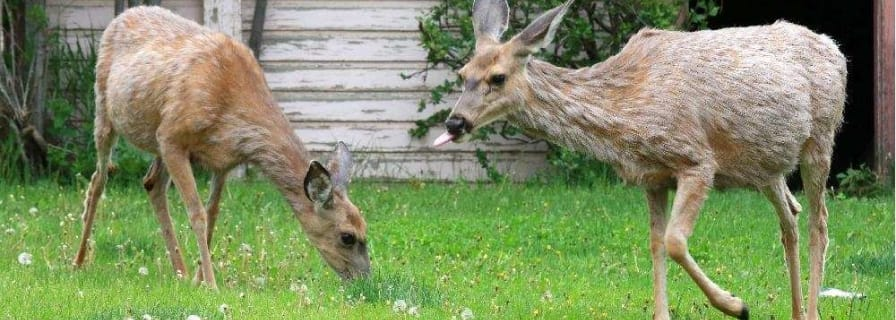 Tips and Information About Wildlife | The Town of Okotoks