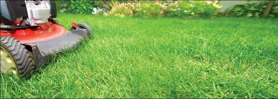 Organics grass clippings