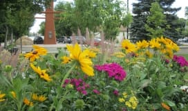 Flowers at the Okotoks Plaza