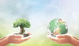 Earth and tree sustainable