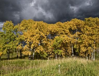 Fall Colours: Photography with Tim Johnston